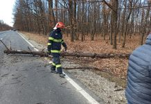 Mașină avariată în trafic de un copac doborât de vânt